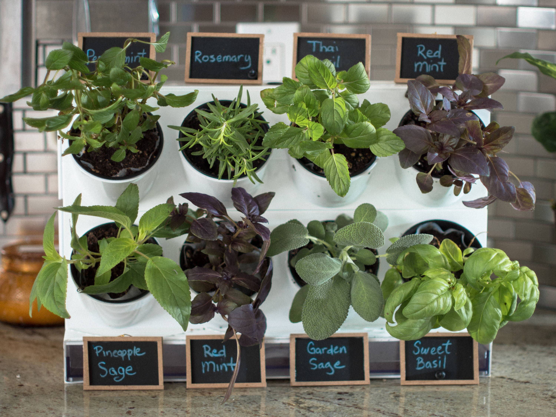 Pixel Kitchen Countertop Garden