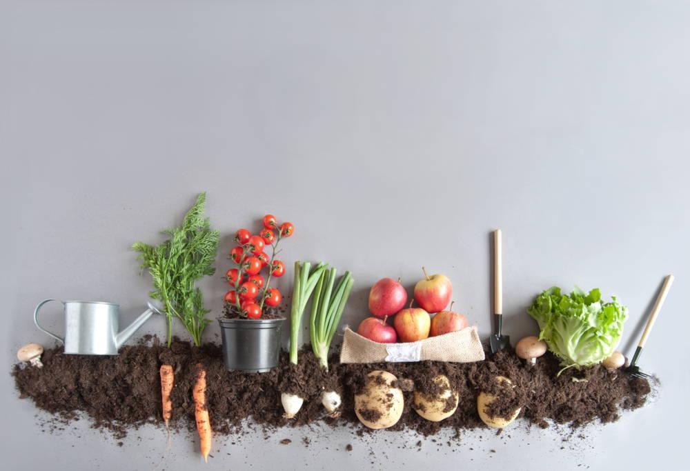 vegan-vegetarian-fruits-vegetables-organic-farmers-market