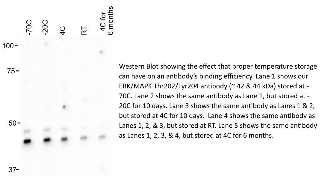antibody storage temps