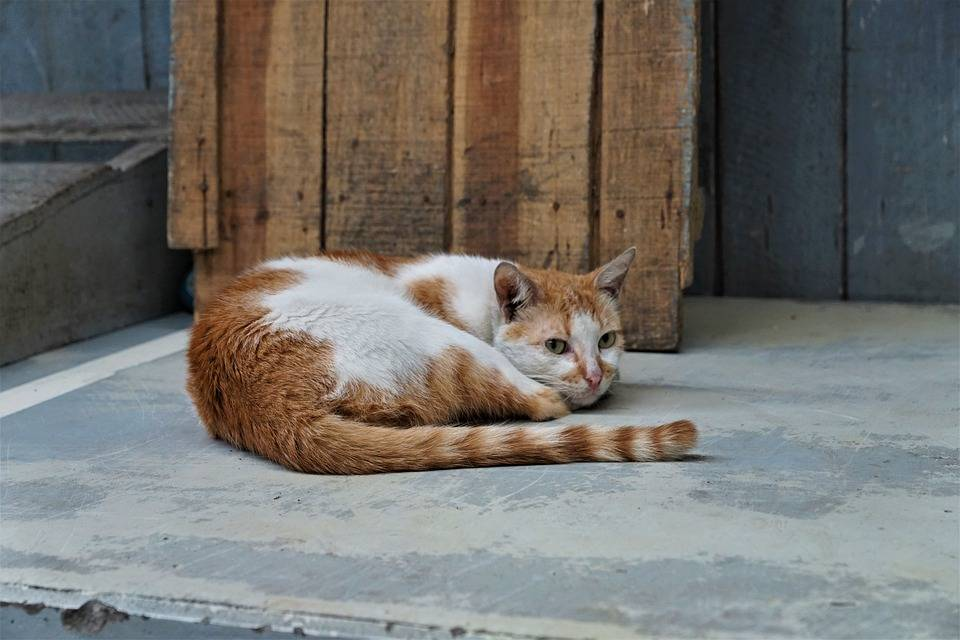 Cats use their tails to communicate