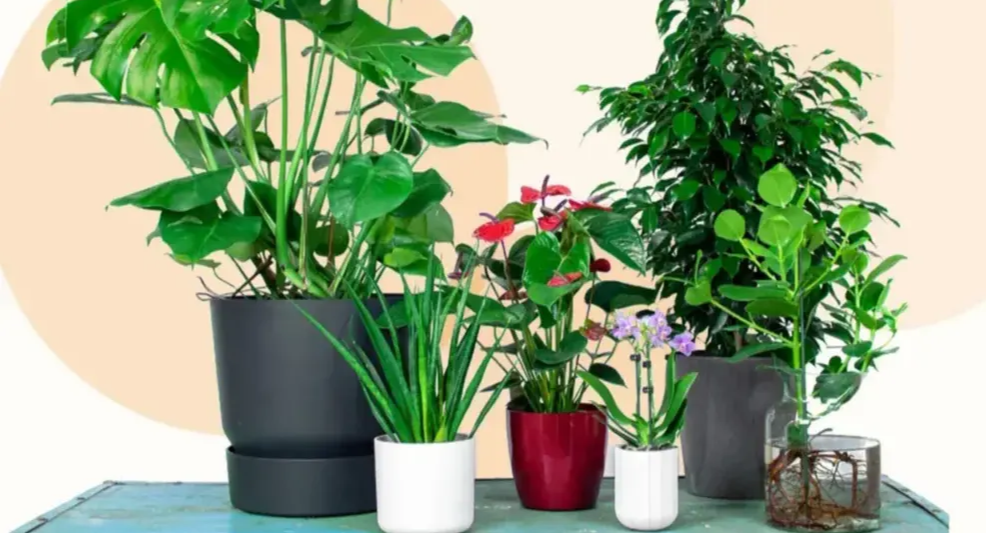 Top 5 des combinaisons plante-pot faciles