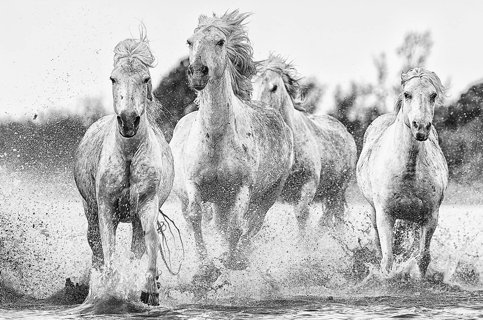 Camargue Horses Wildlife photography tour and expeditions
