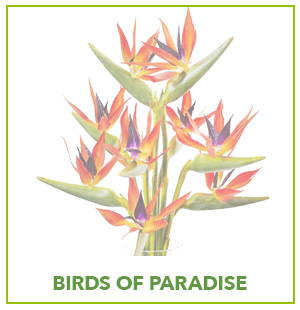 ARTIFICIAL BIRD OF PARADISE PLANTS