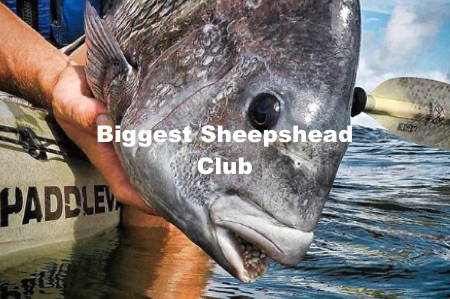 Biggest Sheepshead Club