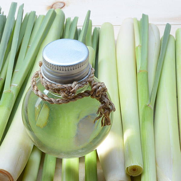 A bottle of lemongrass essential oil on top of lemongrass
