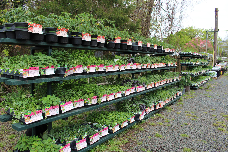Green plants at the Kingstown garden center