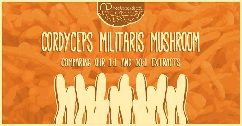 Cordyceps militaris: Comparing Our 1:1 and 10:1 Extracts