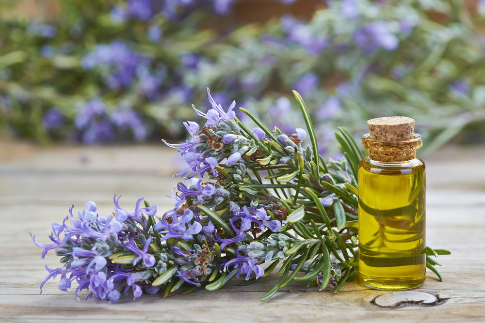 a sprig of rosemary next to a bottle of rosemary essential oil