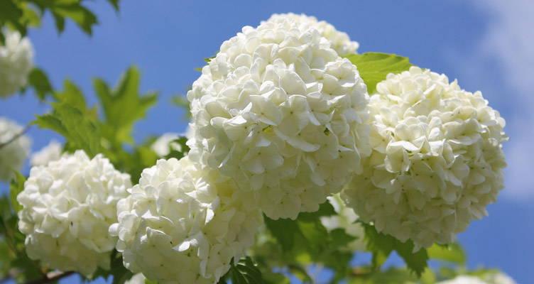 Pruning Snowball