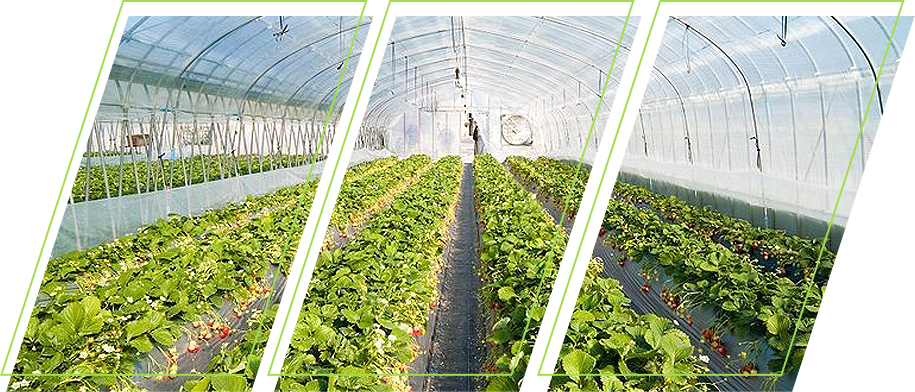 Garden using polyethylene plastic film