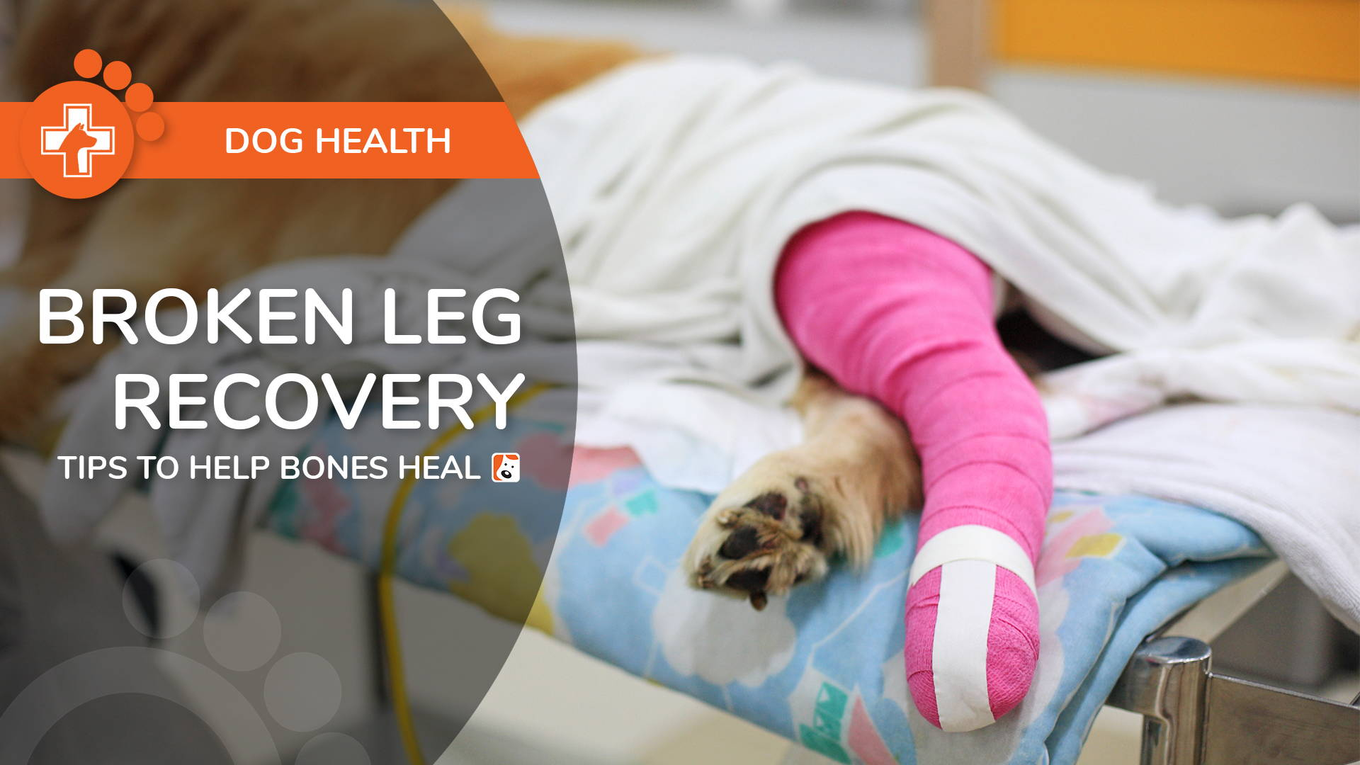 Broken Dog Leg Recovery – Tips to Help Dog Bones Heal Properly