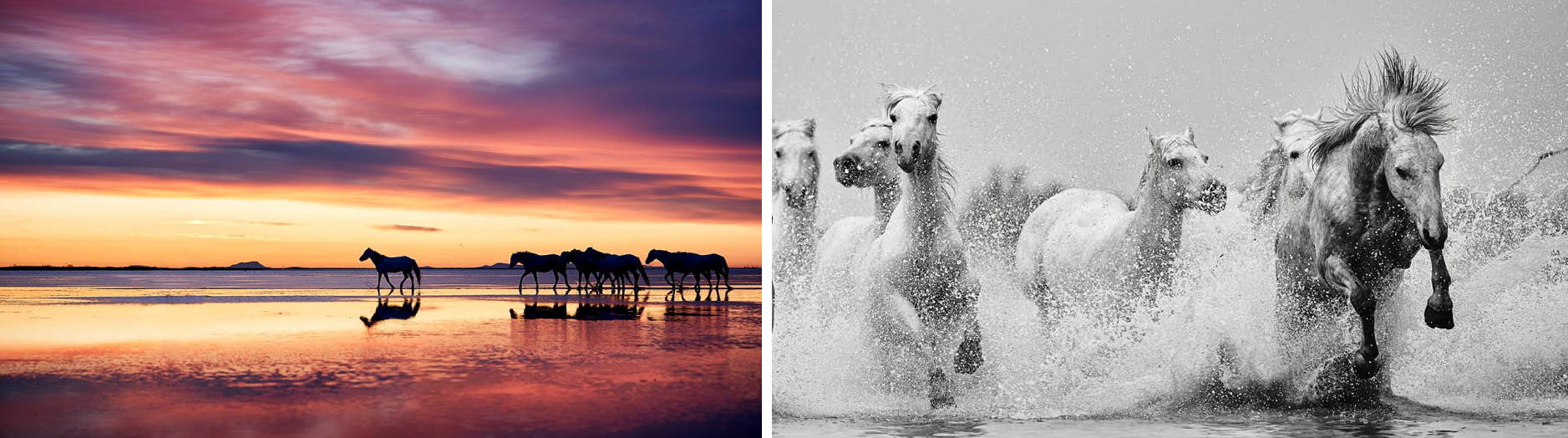 Wildlife photography tour and expeditions in France