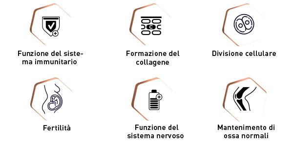 Funzioni di vitamine e minerali