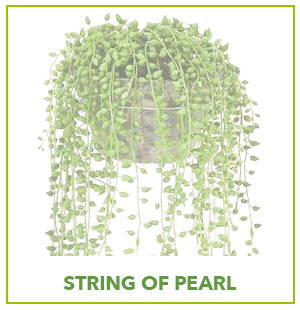 ARTIFICIAL STRING OF PEARLS PLANTS