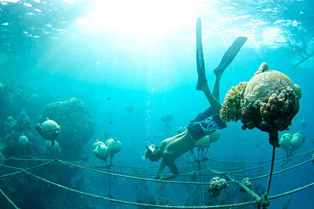 Tahitian pearl farm long lines kamoka diver