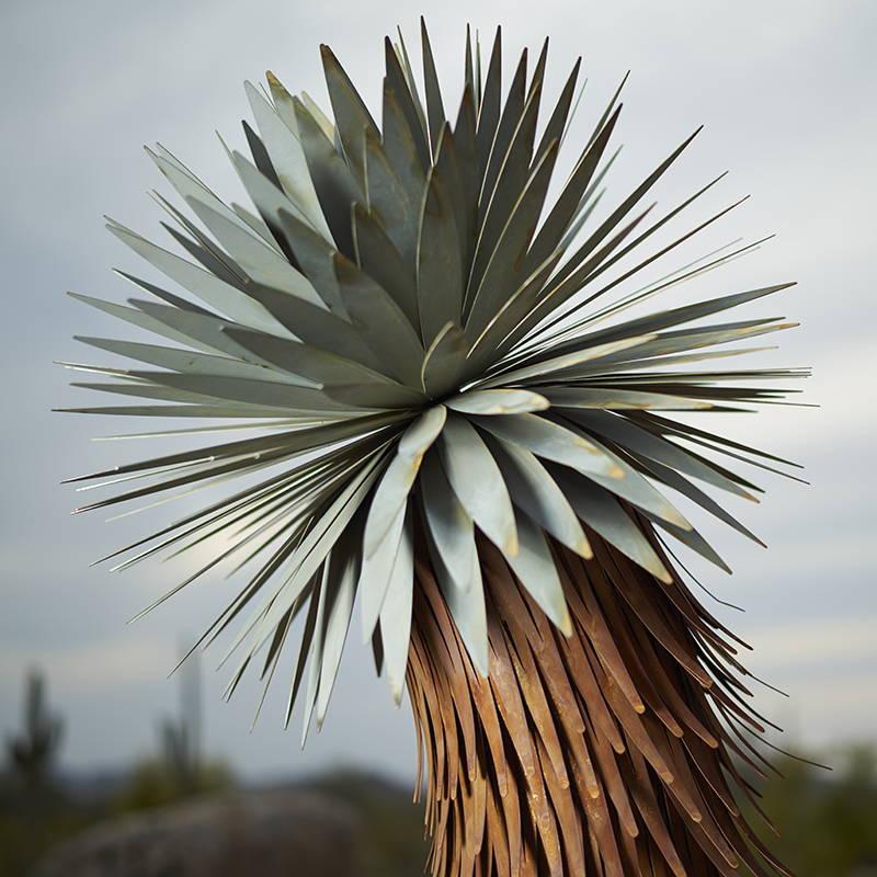 Close up of Joshua Tree branch