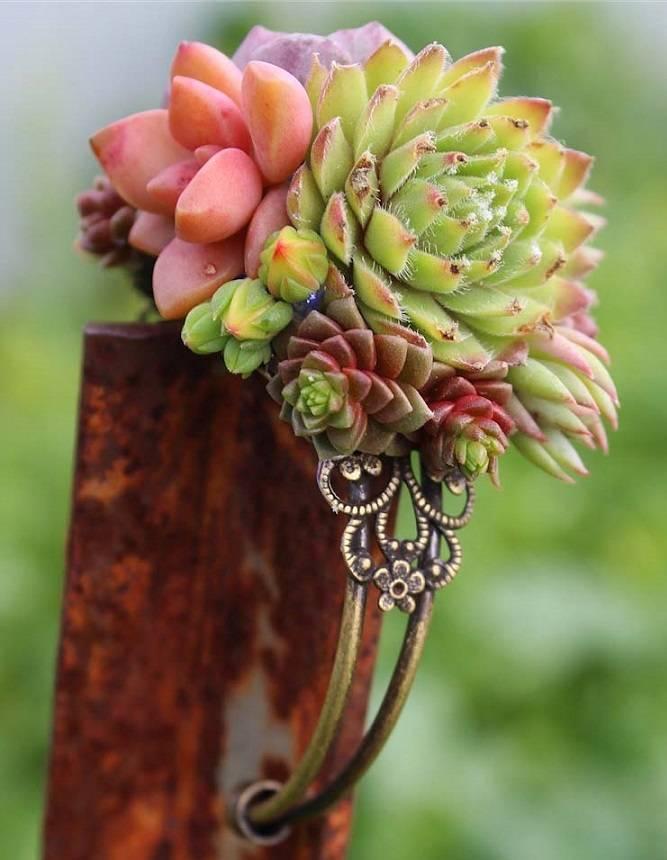 succulent cuff bracelet corsage wedding wrist