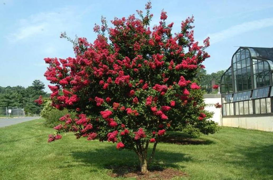 best dwarf trees for landscaping