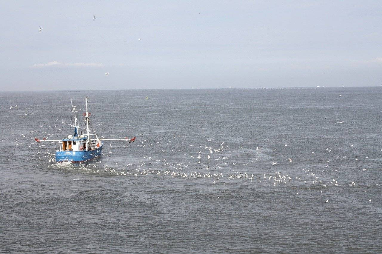 A fishing boat is followed by hundres of seabirds hoping to make the most of the catch