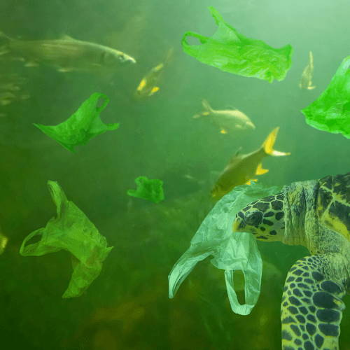 Fish and Turtles Eating Plastic