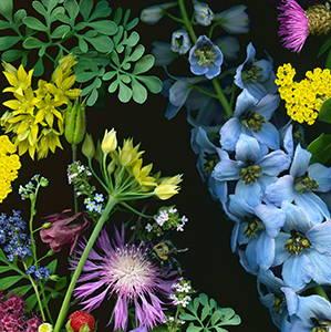 Deb Stoner's Flora