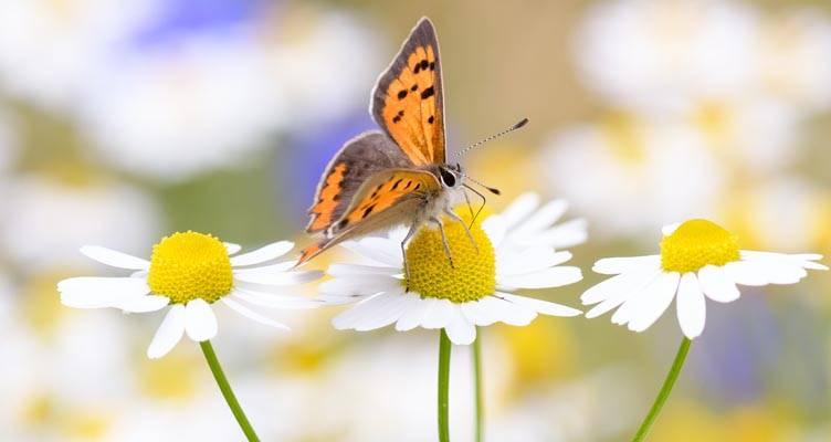 Pillangós kert