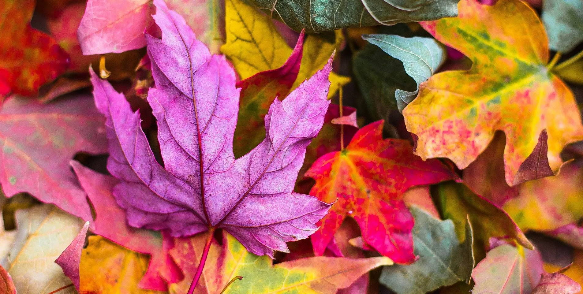 6 Fall DIY projects and activities