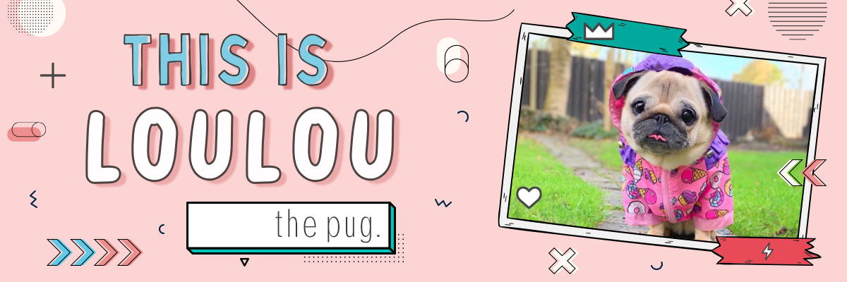 This is LouLou the Pug Banner
