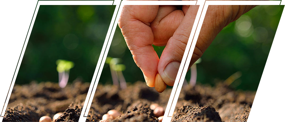 Person planting a seed