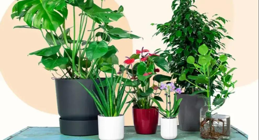 Top 5 der pflegeleichtesten Pflanze-Topf-Kombinationen