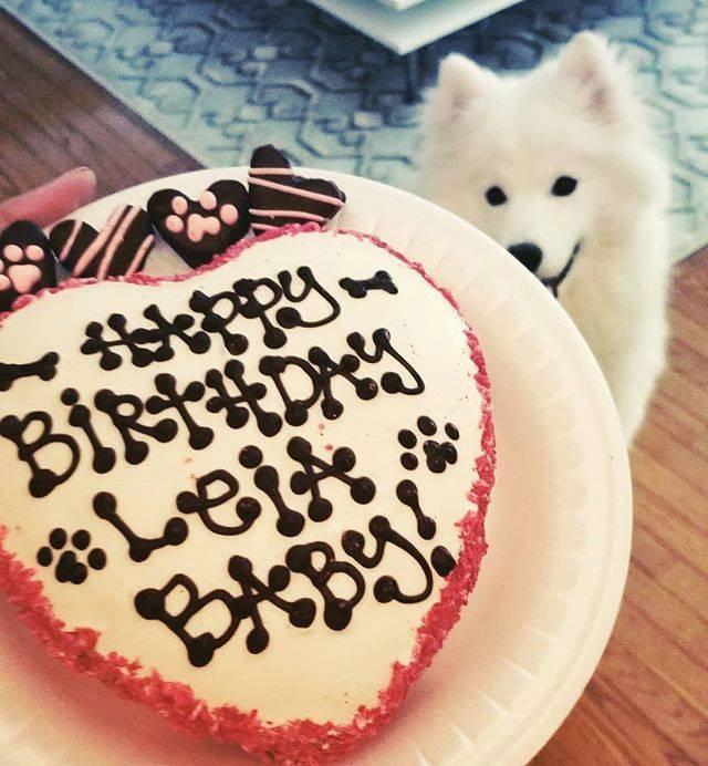 Order Dog Birthday Cake Online