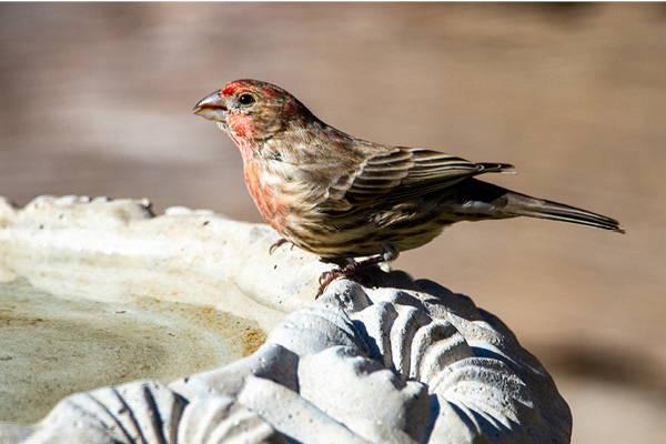 Bird Baths & Heaters