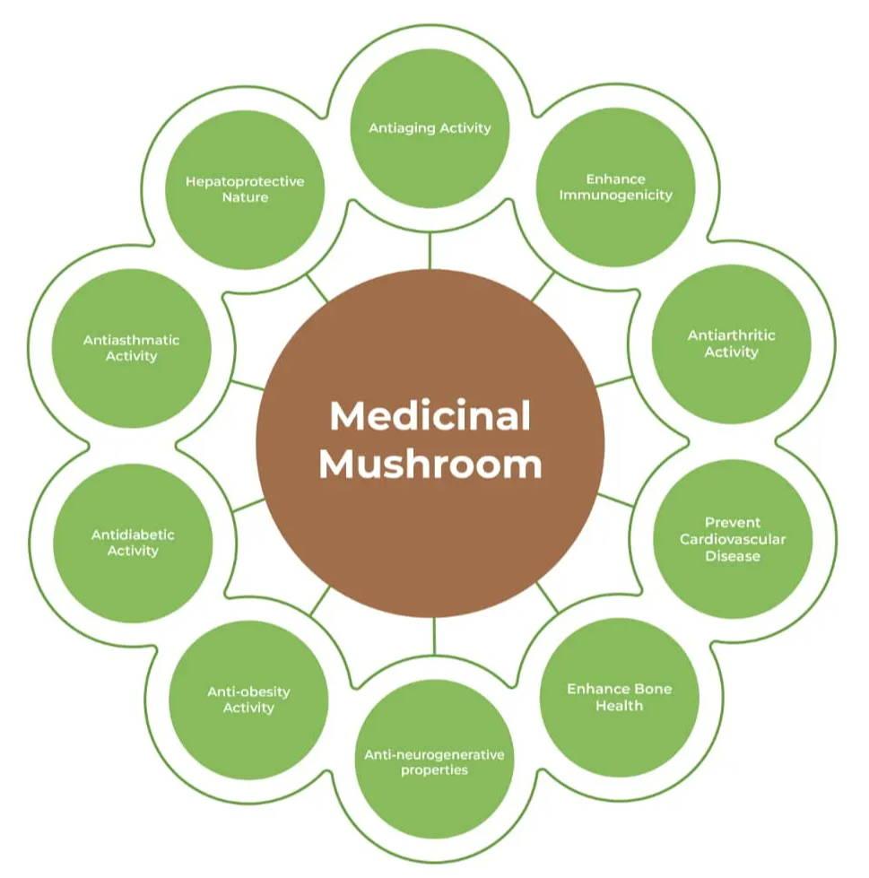 medicinal mushroom therapeutic properties