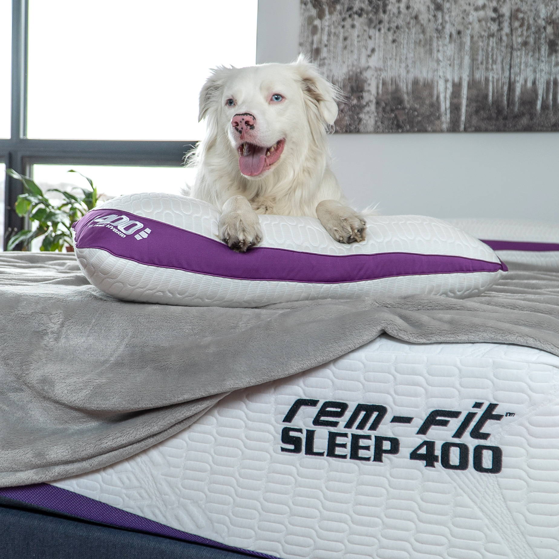 What Type of Mattress is Best for Me?. dog on advanced cooling memory foam mattress and 400 cooling pillow