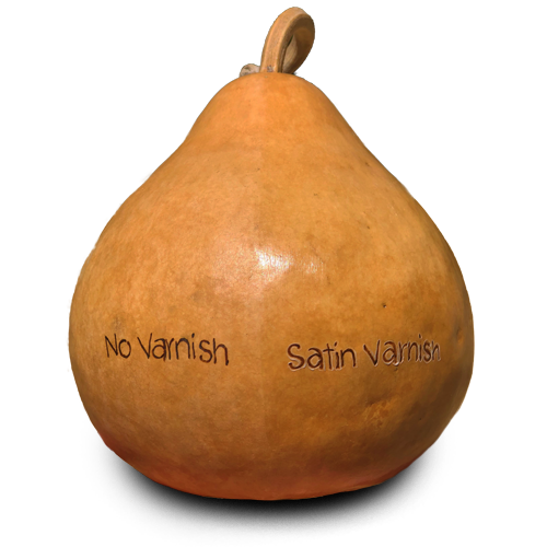 Gourd with Satin Varnish Applied