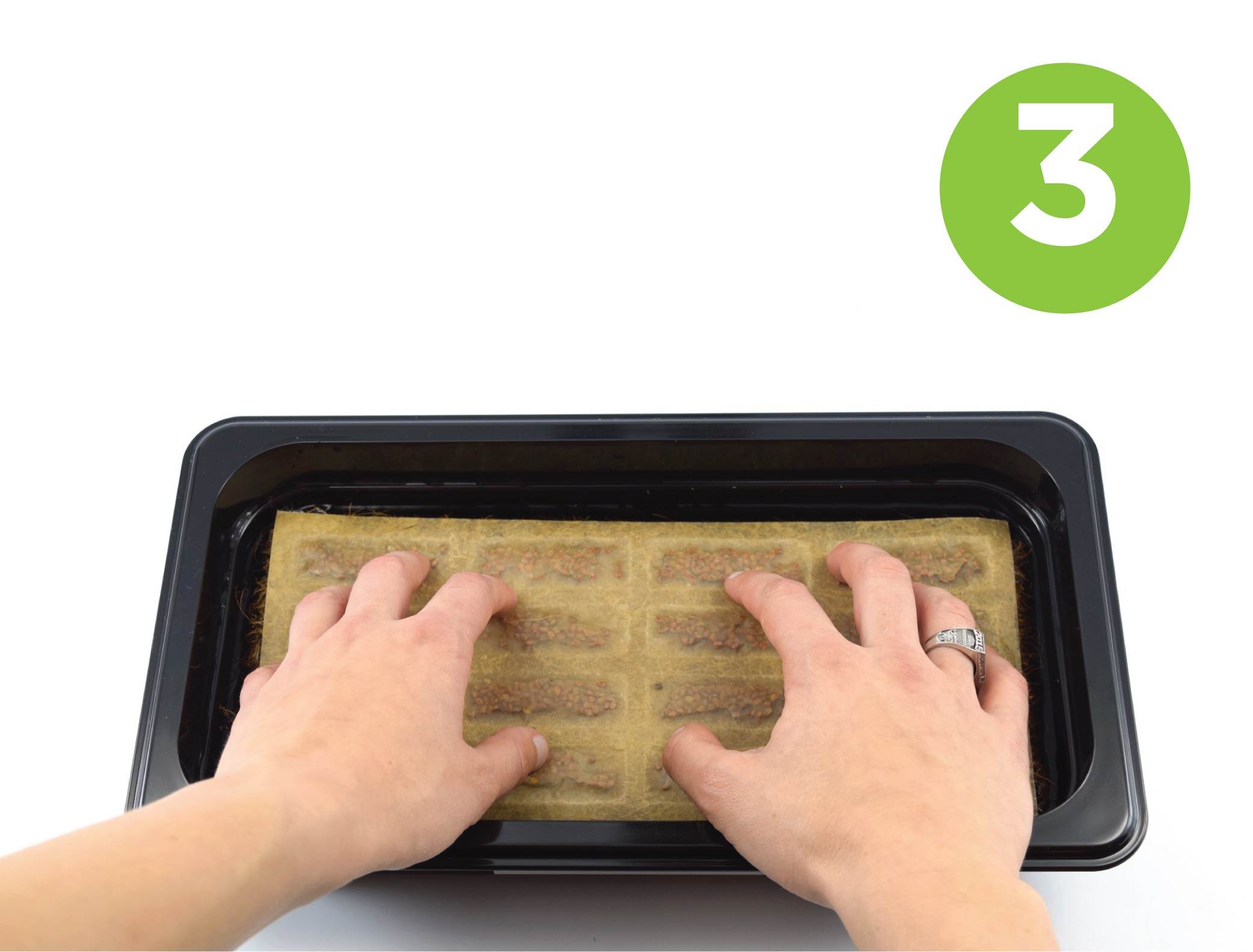 Steps for growing microgreens and micro herbs in a microgreen kit.  Press down on Seed Quilt.