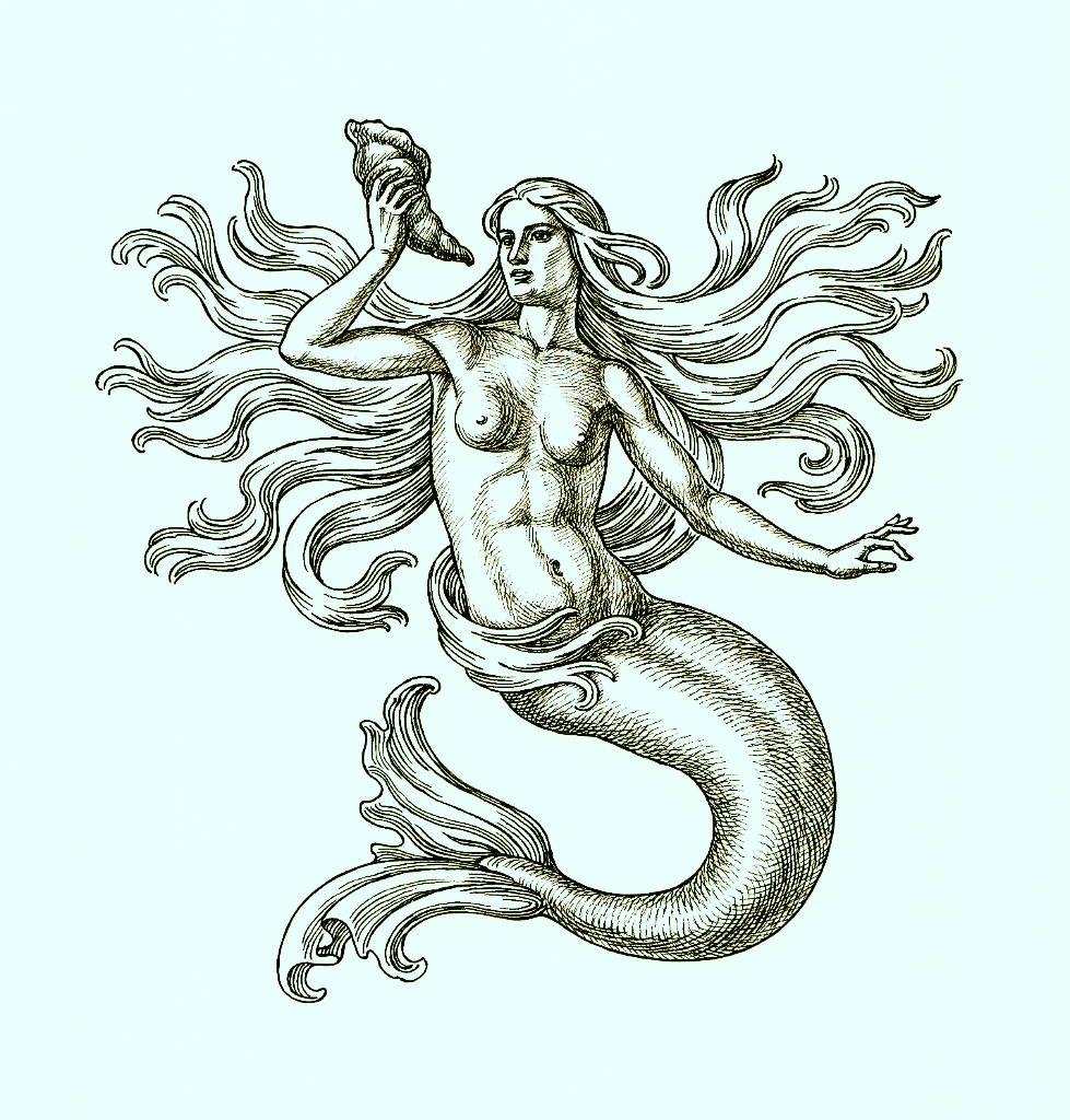 Beautiful mermaid illustration.