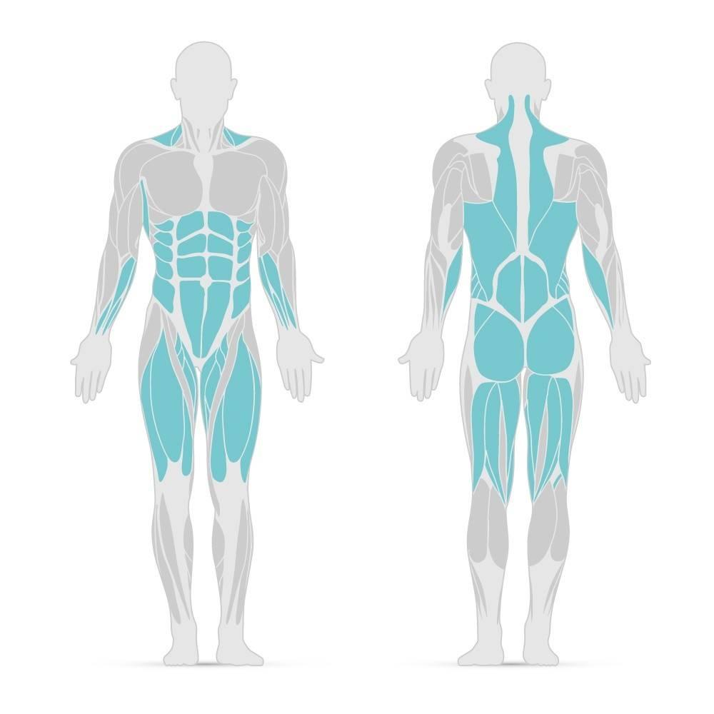 Grafik mit den Muskelgruppen, die der Deadlift trainiert