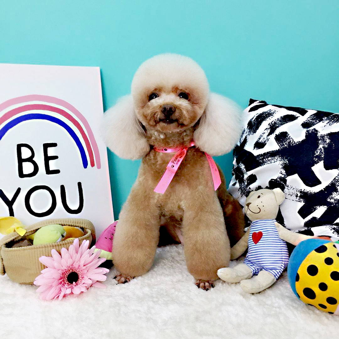 Pawpykisses pet grooming singapore 6