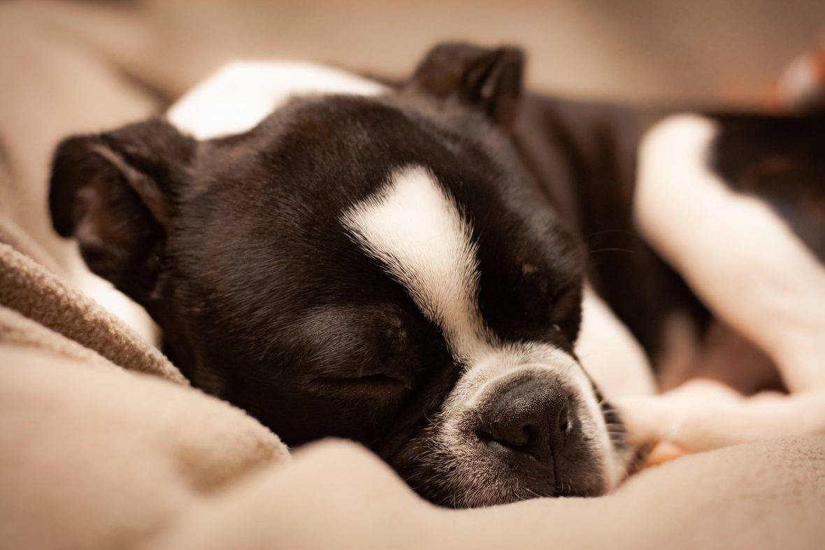 5 tips for keeping your dog relaxed around fireworks this new year