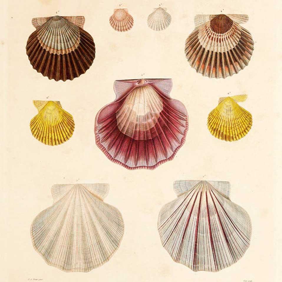 Jean-Baptiste Lamarck Art