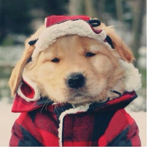 Dog wearing festive hat and coat