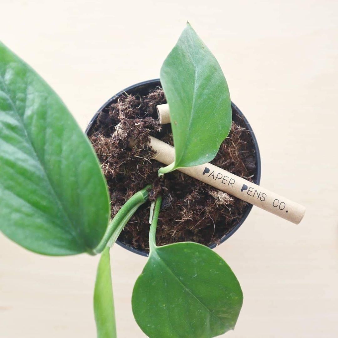 Original Paper Pen Biodegrading in a pot