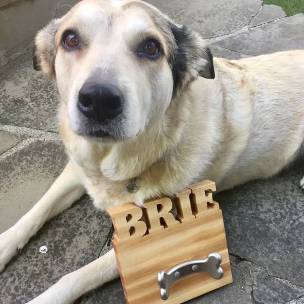 dog leash holder with dogs name cut out of the top