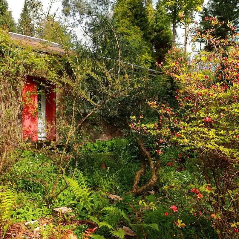 Rewild your garden, take a step back