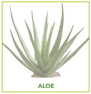 ARTIFICIAL ALOE PLANTS