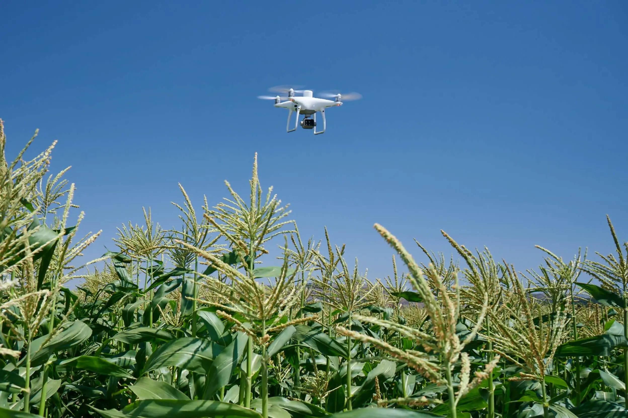 P4 Multispectral Dr Drone Canada Precision Agriculture