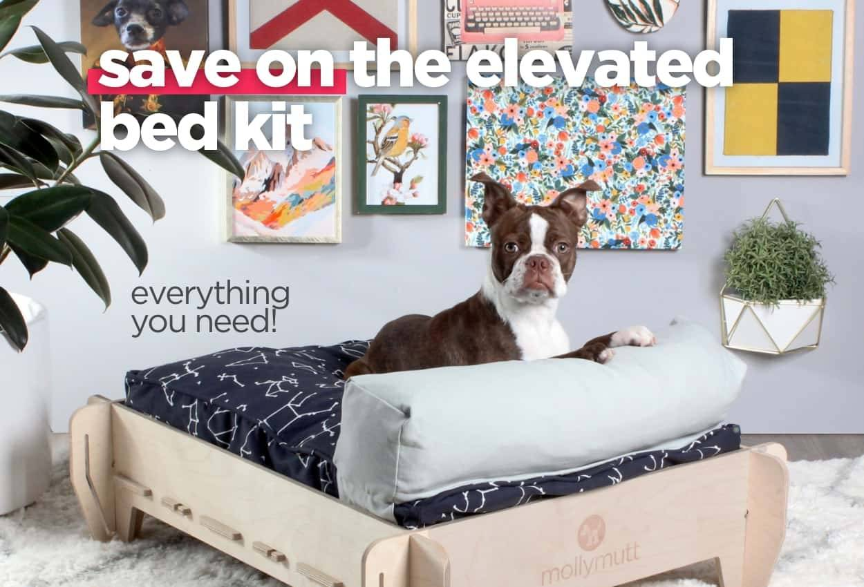 elevated beds for dogs