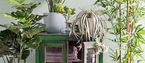 Top 5 des plantes artificielles les plus remarquables