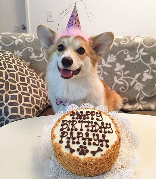 Vegan Dog Birthday Cakes